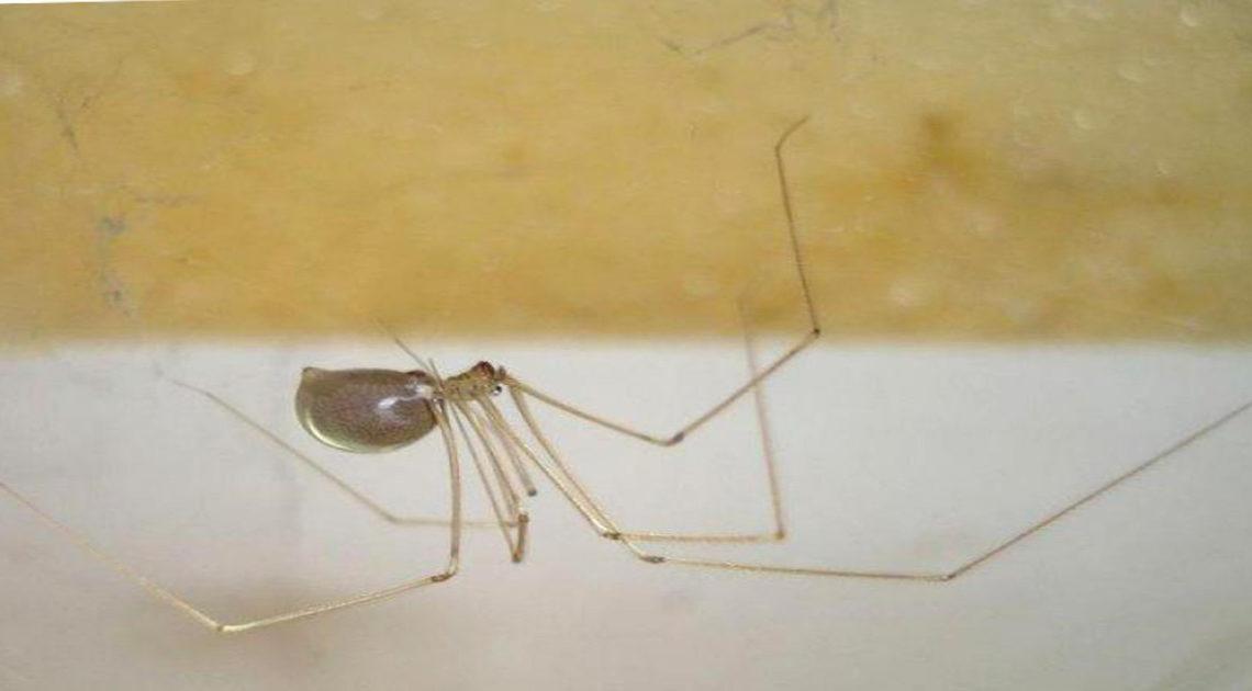 Энтомологи назвали основные причины, по которым не стоит уничтожать в доме пауков